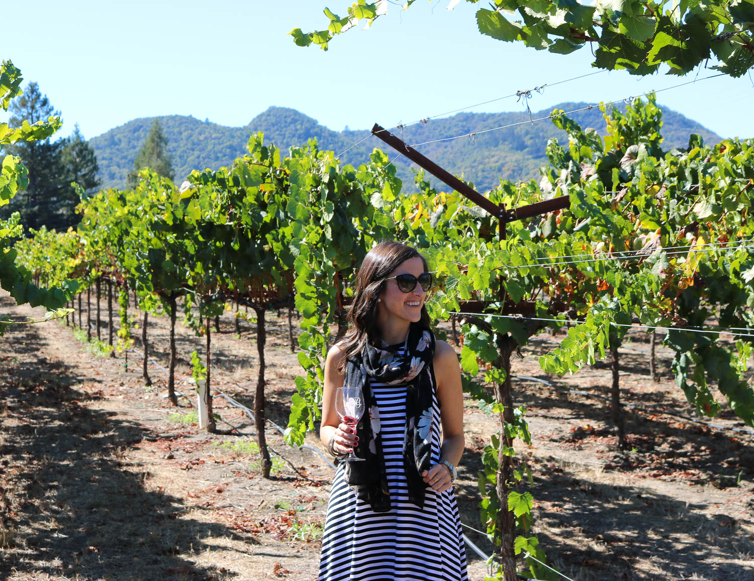 Small Vineyards to Visit in Napa Valley | Cobalt Chronicles | Washington, DC | Travel Blogger