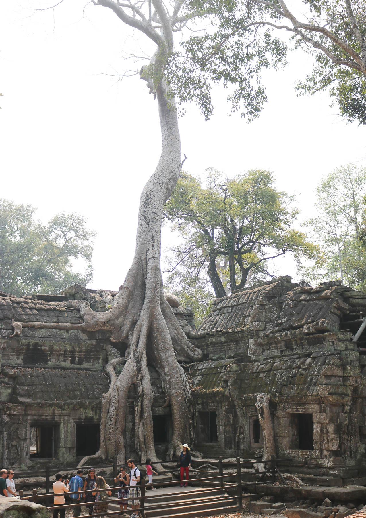 Siem Reap Travel Guide | Ta Phrohm | Cobalt Chronicles | Travel Blogger