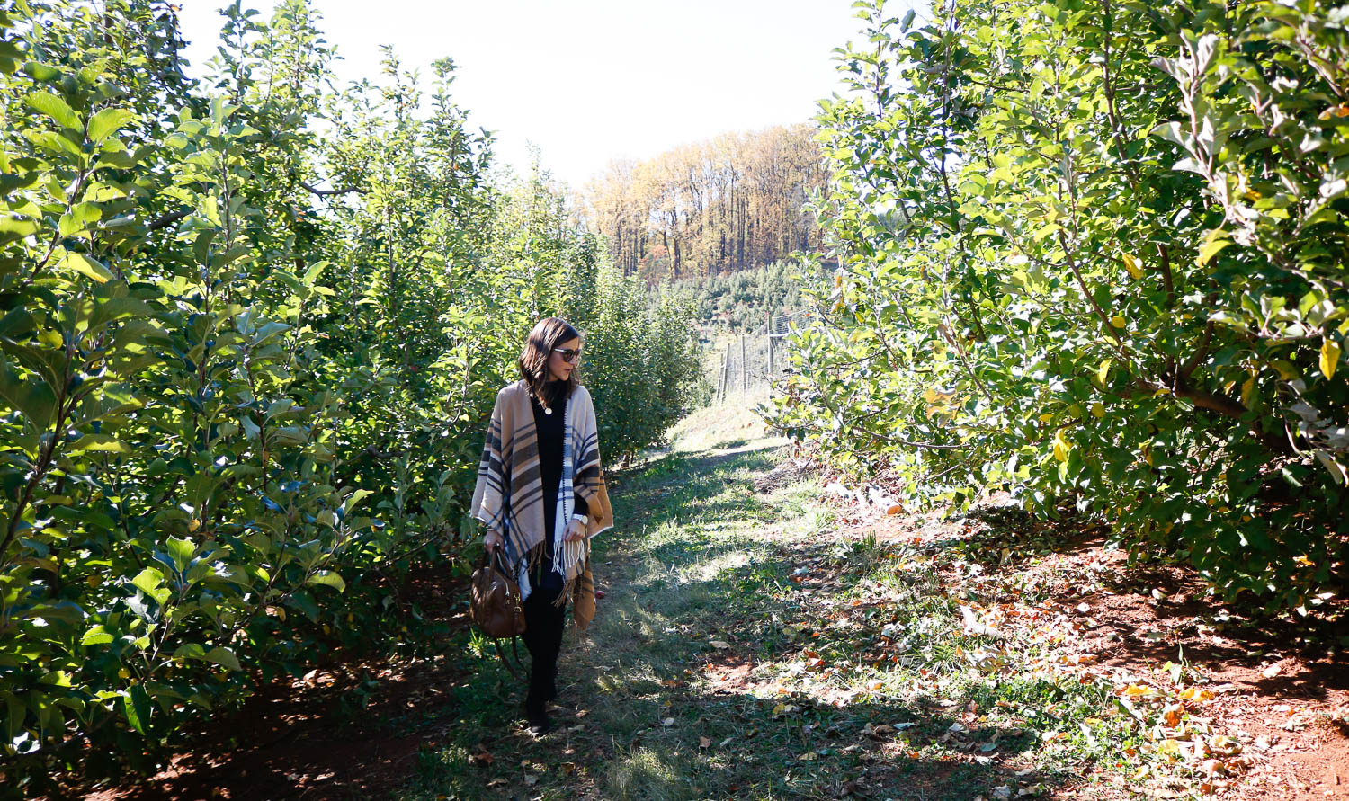 Carter Mountain Orchard | Charlottesville, Virginia Weekend Guide | Cobalt Chronicles